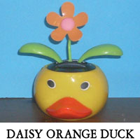 Daisy Orange Duck