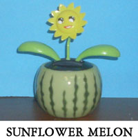 Sunflower Melon